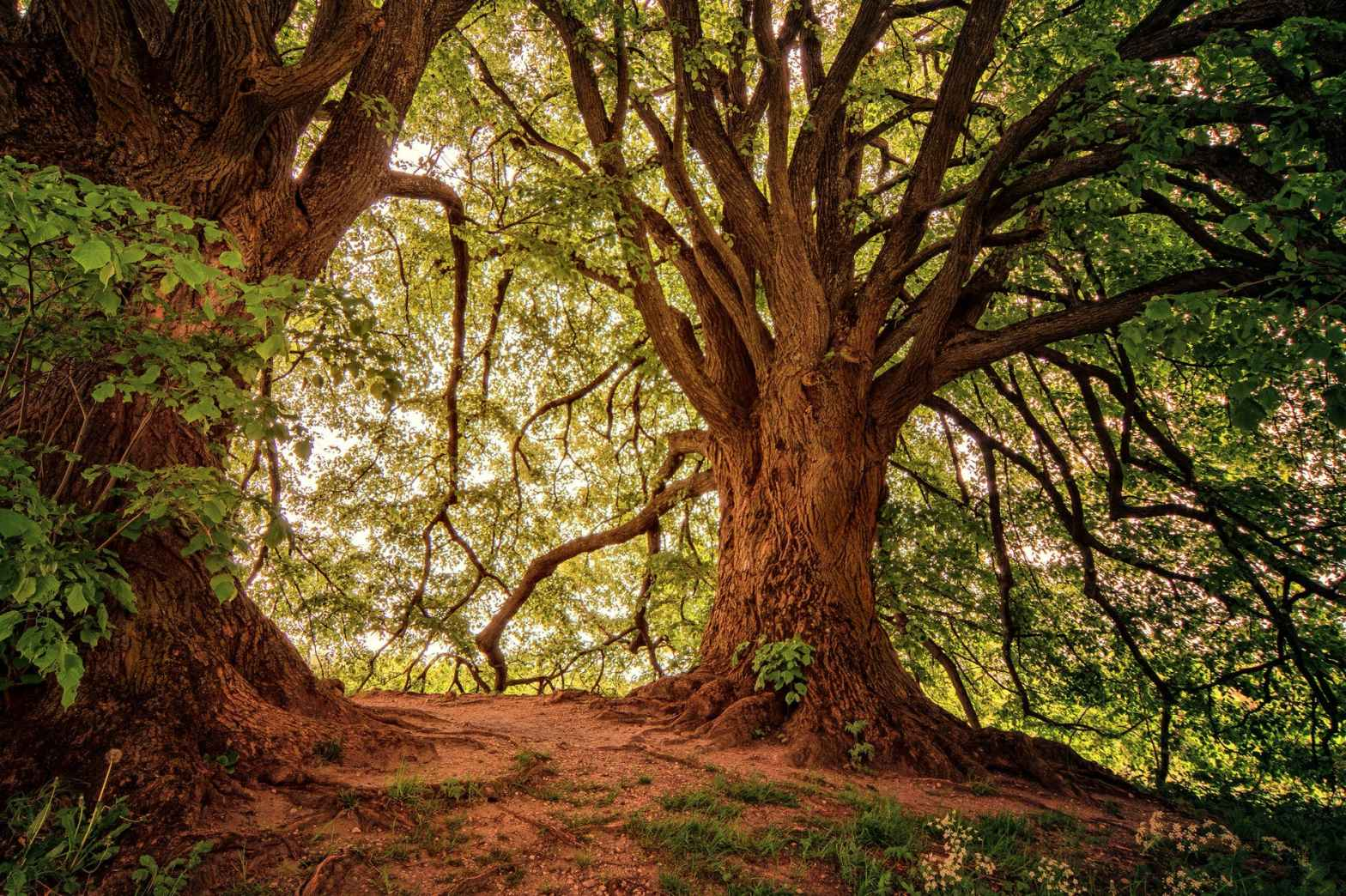 Security - a large sturdy tree with smaller plants around it, representing security and interdependence